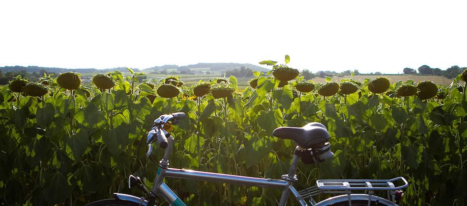 expression cycliste arroser les fleurs.jpg