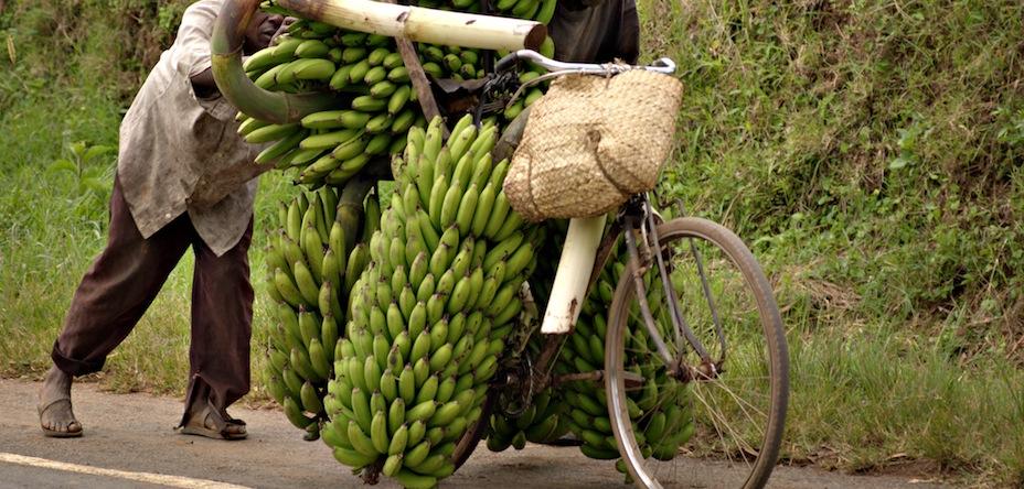 l'alimentation du cycliste