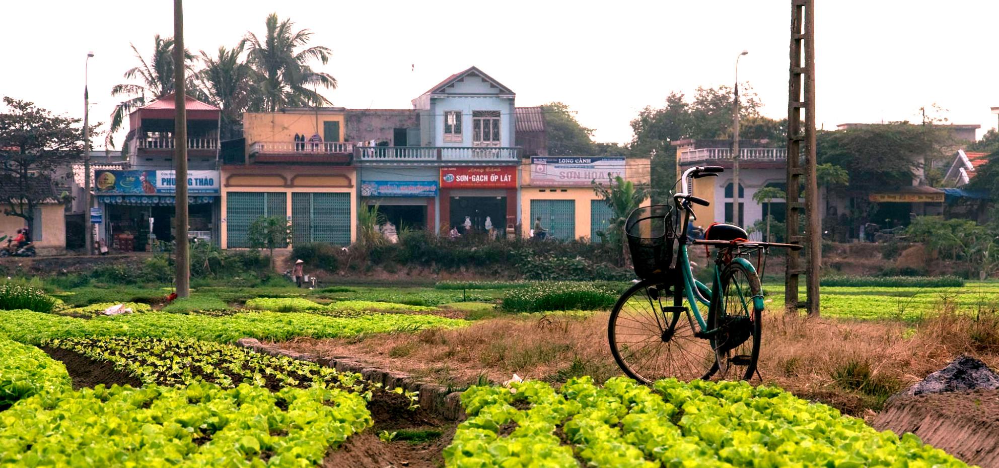 Parcourir 5000 km à vélo pour découvrir l'agriculture urbaine aux Etats-Unis et au Canada, c'est le projet d'« Agrovelocity ».