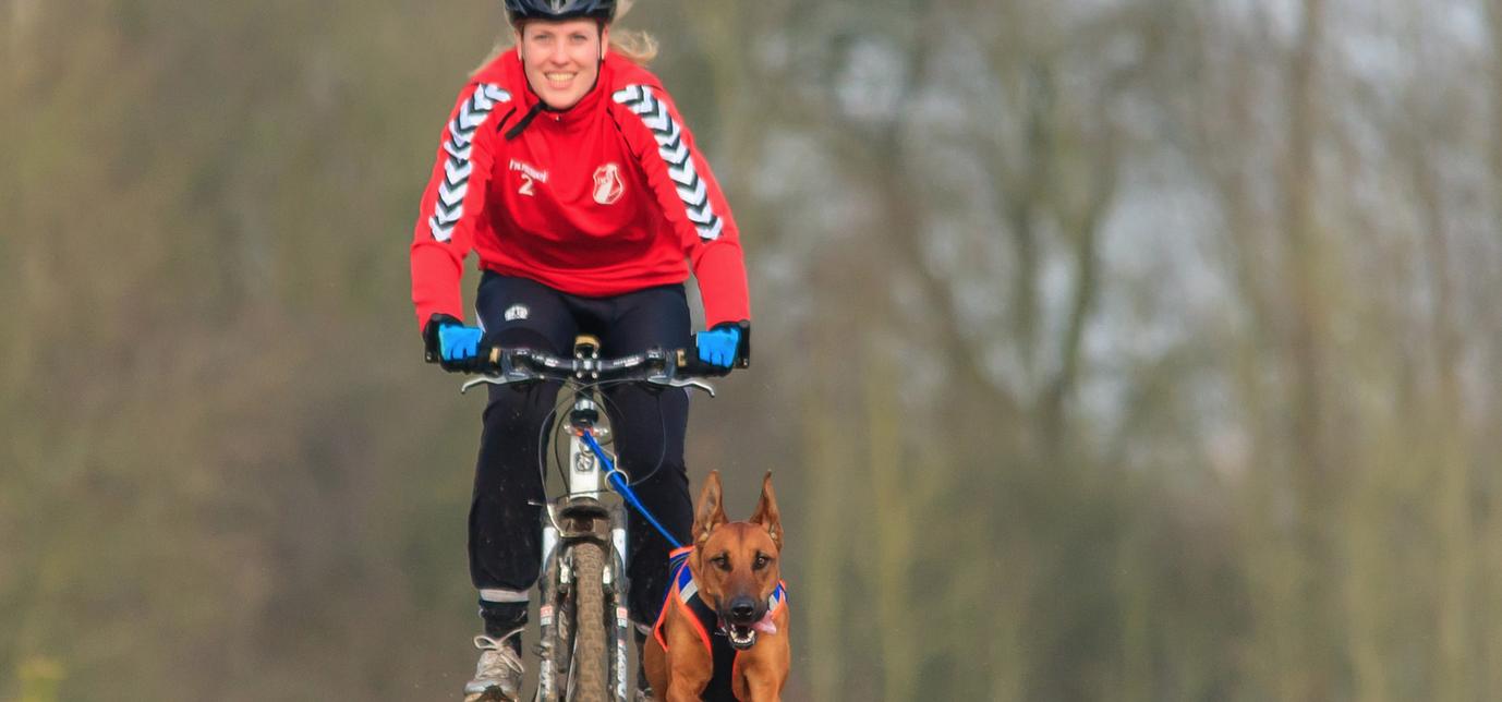 Bikejoring: quand le vélo se partage avec nos amis à 4 pattes