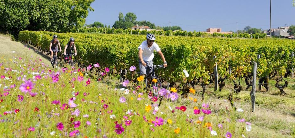 Saint-Émilion à vélo: du plaisir avant tout