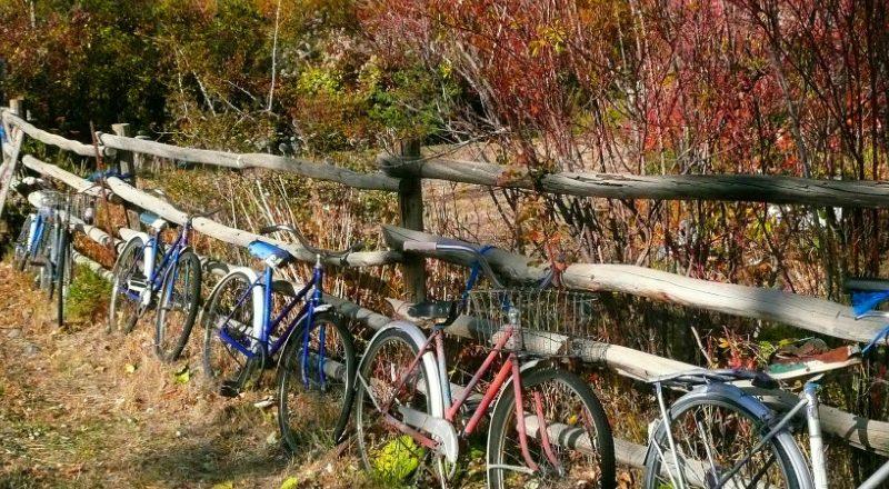 L'engouement pour la pratique du vélo ne cesse d'augmenter. La preuve, les résultats d'une étude menée en 2014: 6 vélos sont vendus chaque minute en France!