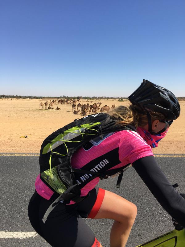 Des chameaux au Soudan