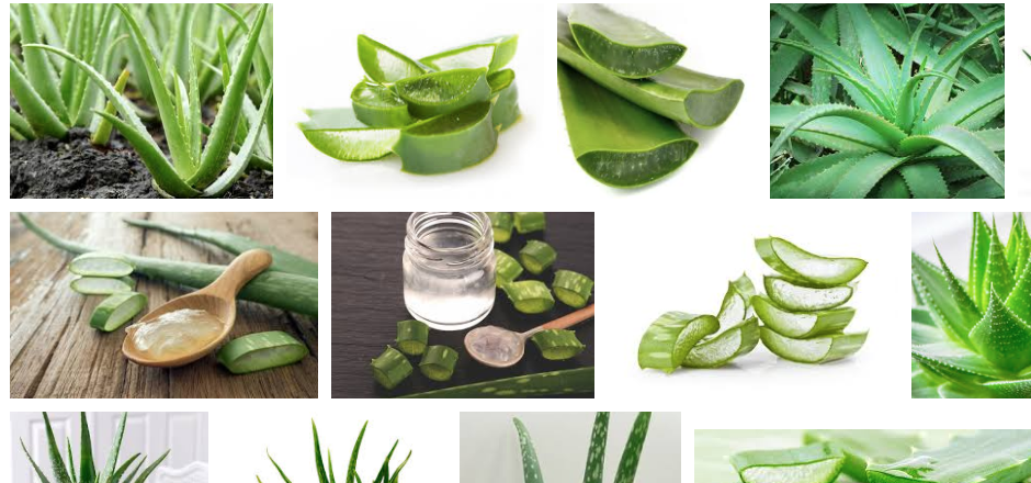 5 bienfaits de l'Aloe Vera