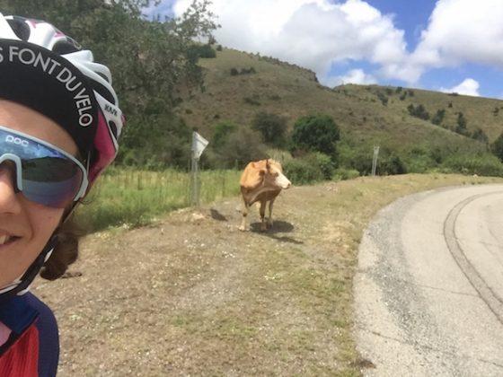 vache voiture balai gaetane grauwels