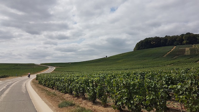 diagonales de France vignes