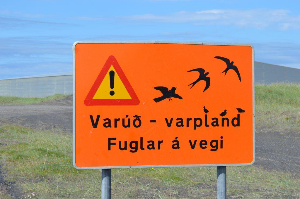 les oiseaux lors de l'islande en velo