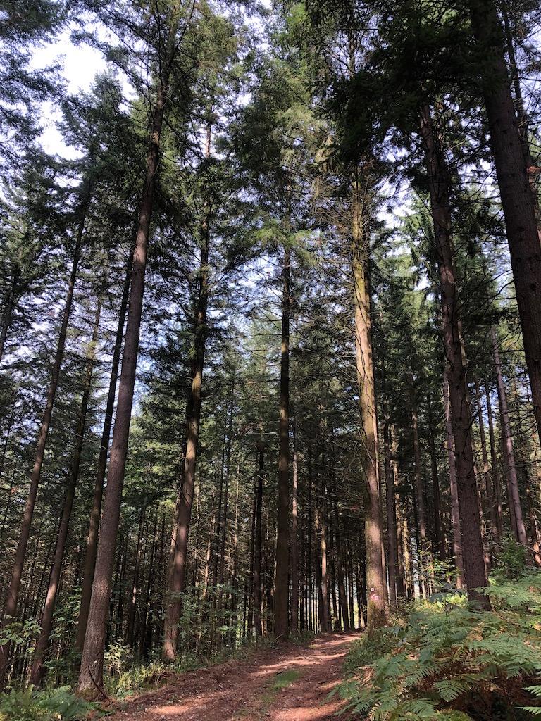 descente dans les bois depuis Mont Beuvray