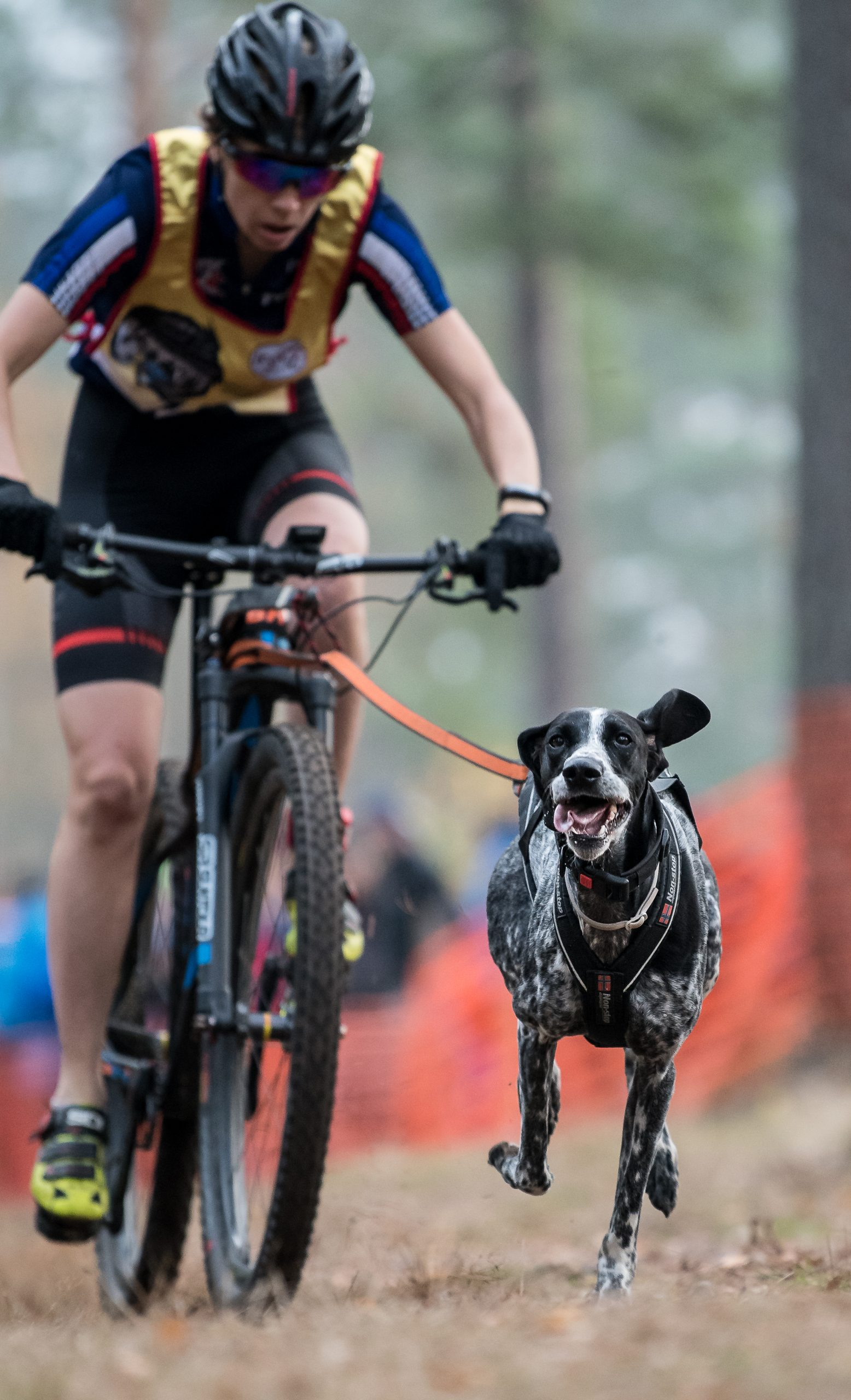 Anne Fulleringer avec sa chienne Tail lors d'une compétition en caniVTT. Crédit photo Stefan Andersson.