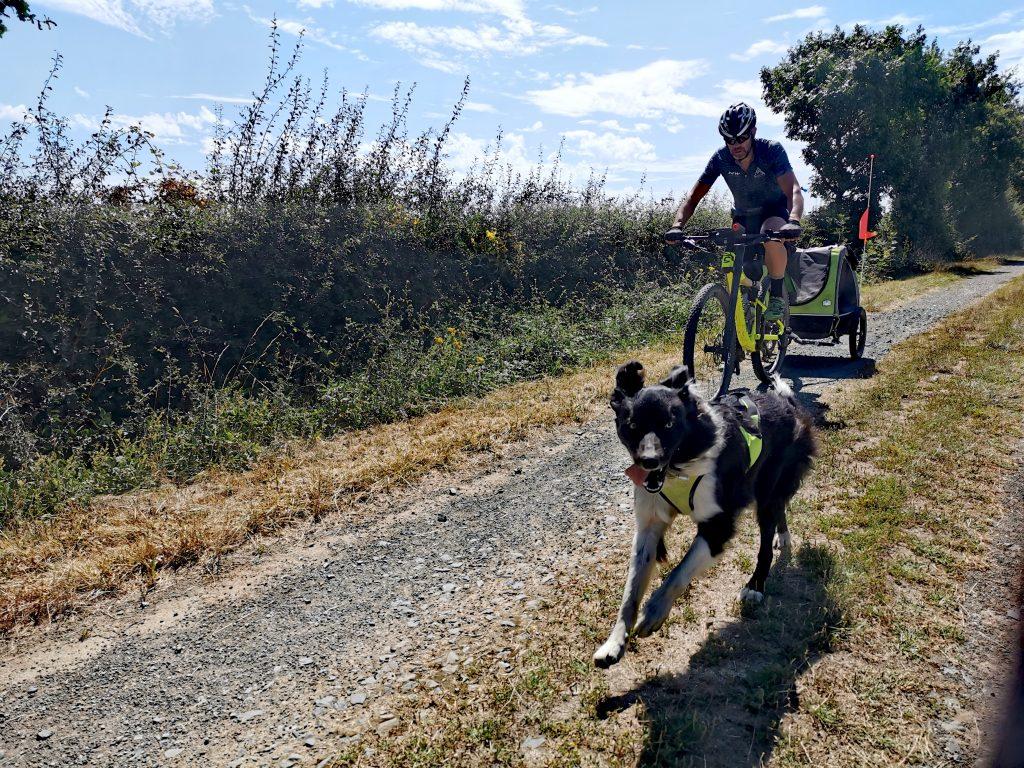 voyager avec son chien à vélo lap parcours