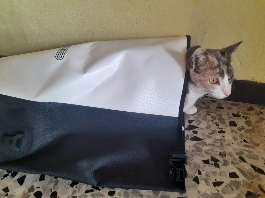 un chat est couché dans une sacoche vélo arrière Orlieb